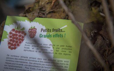 Petits fruits, Grands effets: Près de 1800 arbustes distribués en Wallonie Picarde